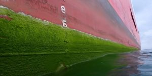 Extensive Biofouling of long grass and algae on a vessel